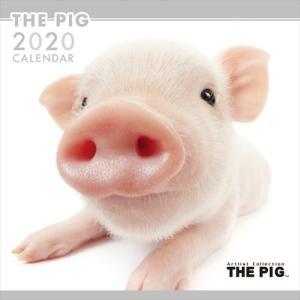 最終処分価格SALE! THE DOG カレンダーシベリアンハスキー 2019年カレンダー 19CL-1136 pigeon-cd