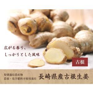 長崎県産!無農薬栽培の生姜1Kg箱|pika831|03