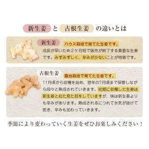 長崎県産!無農薬栽培の生姜1Kg箱|pika831|04
