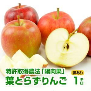 (青森県産)樹齢40年の木から採れた!深い味わいの葉とらずりんご! 1kg(訳あり)(B品)(家庭用)(成田りんご園)|pika831
