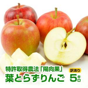 (送料無料)(青森県産)樹齢40年の木から採れた!深い味わいの葉とらずりんご! 5kg(訳あり)(B品)(家庭用)(成田りんご園)|pika831