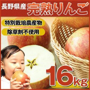 樹上完熟なので甘みが違う!「長野県産」りんご 16Kg (りんご 訳あり)(特別栽培農産物)|pika831