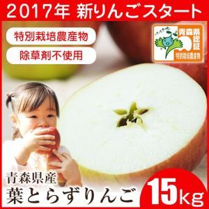 (送料無料)(青森県産)樹齢40年の木から採れた!深い味わいの葉とらずりんご! 15kg(訳あり)(B品)(家庭用)(成田りんご園)|pika831