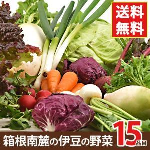 野菜セット 箱根南麓の伊豆の野菜セット 静岡県産 15品目 国産 無農薬 減農薬 機能性野菜