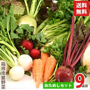 野菜セット 箱根南麓の伊豆の野菜 お試しセット 静岡県産 9品目 国産 無農薬 減農薬 機能性野菜