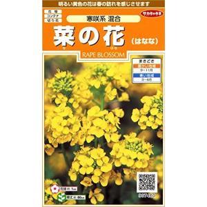 サカタのタネ 実咲花7460 菜の花 寒咲系混合 00907460|pinepinestore