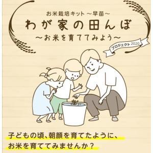 お米栽培キット早苗 北海道産おぼろづき 平成30年度秋に新米...