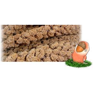 フランス産黄粟の穂 13kg箱入 脱酸素材無|piyocyu-ash