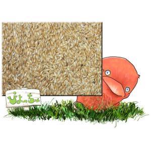 カナリヤシード 20kg 紙袋入|piyocyu-ash