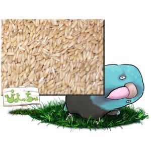 ムキオーツ 10kgx1 紙袋入|piyocyu-ash