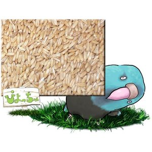 ムキオーツ 10kgx2 紙袋入|piyocyu-ash