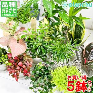 観葉植物 お試しミニ観葉 5種セット 品種おまかせ 3.5号鉢 受け皿付き 育て方説明書付き|planchu
