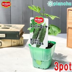 野菜苗 デルモンテ ゴーヤ苗 スーパーゴーヤ 3号ポット 3ポットセット 野菜 ゴーヤ|planchu