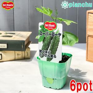 野菜苗 デルモンテ ゴーヤ苗 スーパーゴーヤ 3号ポット 6ポットセット 野菜 ゴーヤ|planchu