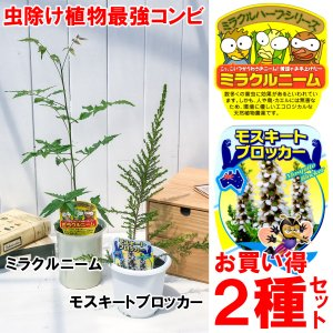 ハーブ 虫除け植物 ミラクルニーム & モスキートブロッカー お買い得2種セット|planchu