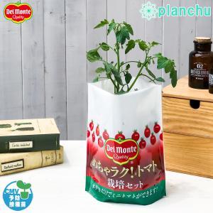 デルモンテ めちゃラク!トマト栽培セット 野菜 野菜苗 トマト トマト苗 予防接種苗 植え込み完成品|planchu