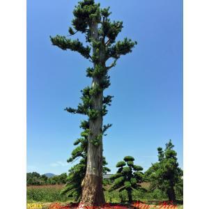 商品紹介 圃場紹介 第一圃場〜第九圃場からなる植木の畑があり、その畑の木々はどれもない年月と手間をか...