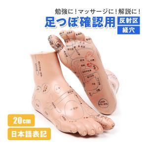 足の反射区、経穴を日本語表記で書かれた足つぼ模型です。  約20cm×8cm×11cmの立体模型です...