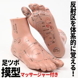 全長20cmの足つぼ模型には、各ツボが日本語表記で記載、マッサージの教材にはもちろんのこと、ご家庭で...