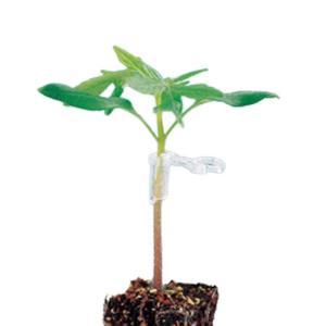 ジョインホルダー 1.7 1000個入 接木 用 ホルダー 茎径1.7から2.2mm シーム カ施DPZZ|plusys