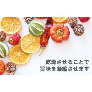 食品乾燥機 ドラッピーmini (ミニ) DSJ-mini 静岡製機 製 PDZ|plusys|04