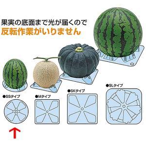 シンエツマットSS 小玉西瓜用 直径115×H25 2,000枚 スイカ タ種【代引不可】|plusys