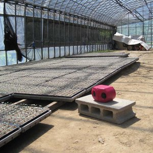 コンパル 乾電池式 ねずみ防除器 ネズミ対策 アサノヤ産業 PD|plusys|04