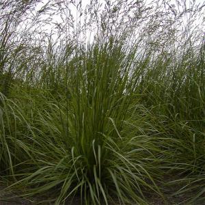 【種 5kg】 ボンサイ3000 トールフェスク 果樹草生栽培用 フルーツグラス 雪印種苗 米S【代引不可】 plusys