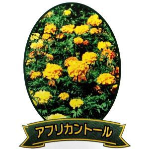 【種 3L】 マリーゴールド アフリカントール 緑肥 景観美化 [播種期:5〜7月] 雪印種苗 米S【代引不可】 plusys