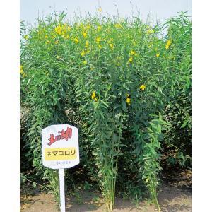 【種 10kg】 クロタラリア ネマコロリ 畑地 線虫対策 緑肥 [播種期:2〜9月] 雪印種苗 米S【代引不可】 plusys