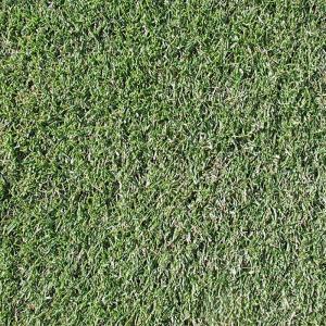 【種 10kg】 ペレニアルライグラス レグゼット 芝 緑化用 [播種期:3〜10月] 雪印種苗 米S【代引不可】|plusys