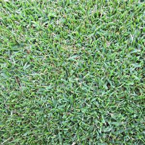 【種 3kg】 ケンタッキーブルーグラス ラトー 緑化用 芝生用 緑肥 [播種期:4〜10月] 雪印種苗 米S【代引不可】|plusys