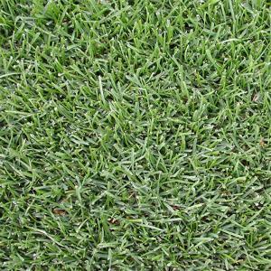 【種 3kg】 ケンタッキーブルーグラス ビーウィッチ 緑化用 芝生用 緑肥 [播種期:3〜10月] 雪印種苗 米S【代引不可】|plusys