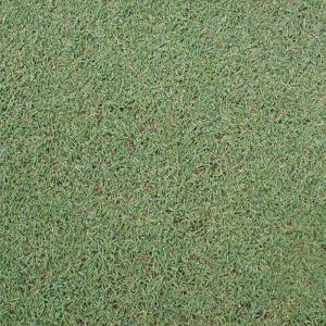 【種 2kg】 ベントグラス ペンクロス コート種子 芝生用 緑肥 [播種期:3〜10月] 雪印種苗 米S【代引不可】|plusys