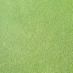 【種 1kg】 ベントグラス CY-2 シーワイツー 裸種子 芝生用 緑肥 [播種期:3〜10月] 雪印種苗 米S【代引不可】|plusys