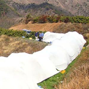 サニーセブン T-750 3m×100m 果樹保護シート 柑橘系 被覆資材 石川殖産 D|plusys