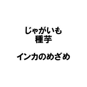 【2kg】 種芋 ジャガイモ インカのめざめ 混玉 じゃがい...