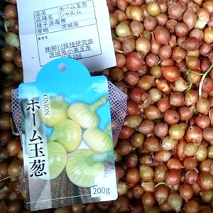 【1kg】 ホーム玉ねぎ タマネギ 玉葱 種 栽培用 米S【代引不可】|plusys