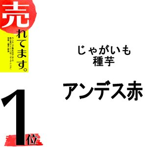 【2kg】 種芋 ジャガイモ アンデス 赤 じゃがいも 栽培用 米S【代引不可】|plusys