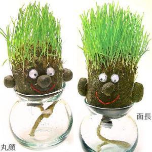 観葉植物 インテリア ヘアラボ hair LABO 栽培キット|plywood