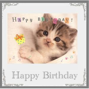 ミュージックバースデーカード 猫フォトシンプルミュージックカード HAPPY BIRTHDAyの曲 ...