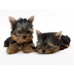 小動物用シャンプー 猫 犬 ペットシャンプー 業務用ペットシャンプー 4L|pocketcompany|04