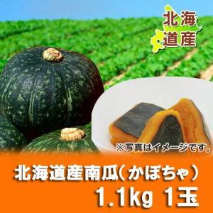 「北海道のかぼちゃ」北海道産 かぼちゃ(南瓜) 1.1kg以上 1玉 pointhonpo