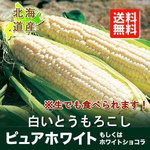 とうもろこし 北海道 ピュアホワイト 送料無料 北海道産の白いとうもろこし「ホワイト ショコラ」Lサイズ 10本 価格 3150円|pointhonpo