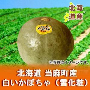 【北海道 カボチャ・南瓜】 北海道産のカボチャ 北海道で作られた珍しい白いかぼちゃ 雪化粧 カボチャ 1玉 約1.1kg 【\432】|pointhonpo