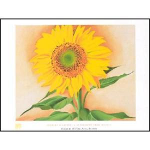 【アートポスター】 オキーフ マギーからのひまわり 60cm×80cm|poster