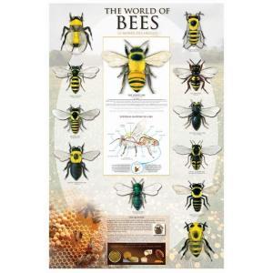 蜂の世界 ポスター/フレーム付