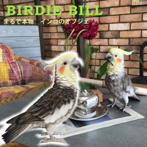 オカメインコ オブジェ  ディスプレイ 置物 オブジェ インテリア 雑貨 小鳥 BIRDIE BILL(バーディ ビル)オカメインコ|potarico