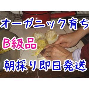 ジャム用 甘夏みかん 2kg=600円 オーガニック育ち B級品 通常販売規格外 伊豆 安い