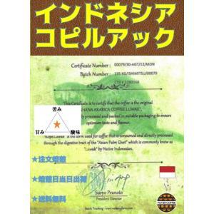 インドネシア コピルアック 500g|potiercoffee
